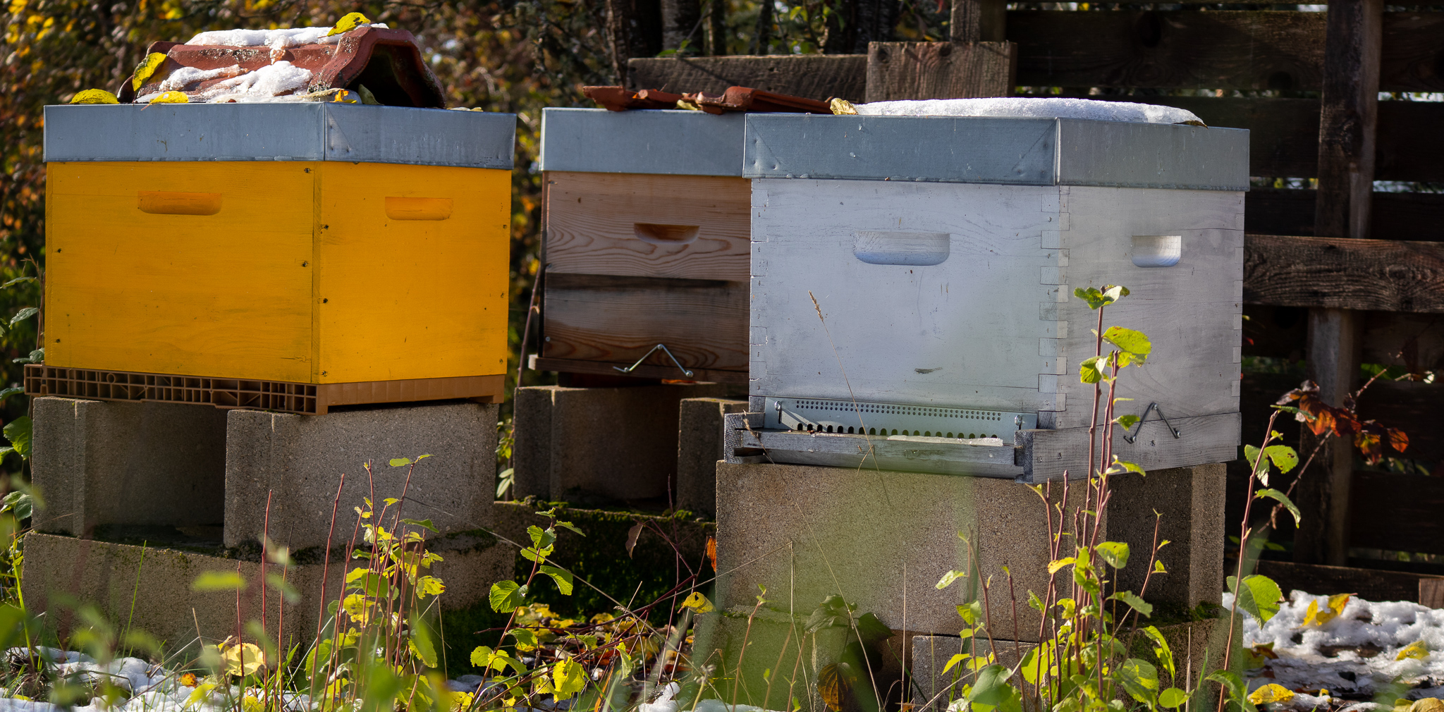 29-11-2019 Le froid, les abeilles et l'apiculteur
